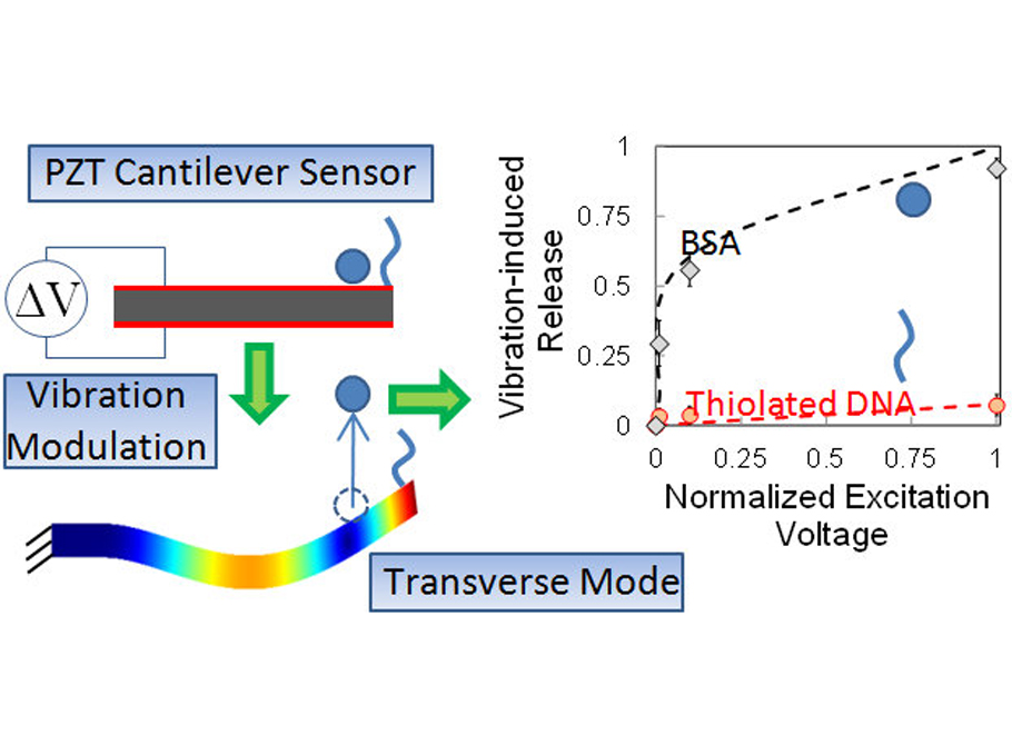 Reduction of nonspecific protein adsorption on cantilever biosensors caused by transverse resonant mode vibration Analyst 139, 1112-1120 (2014)