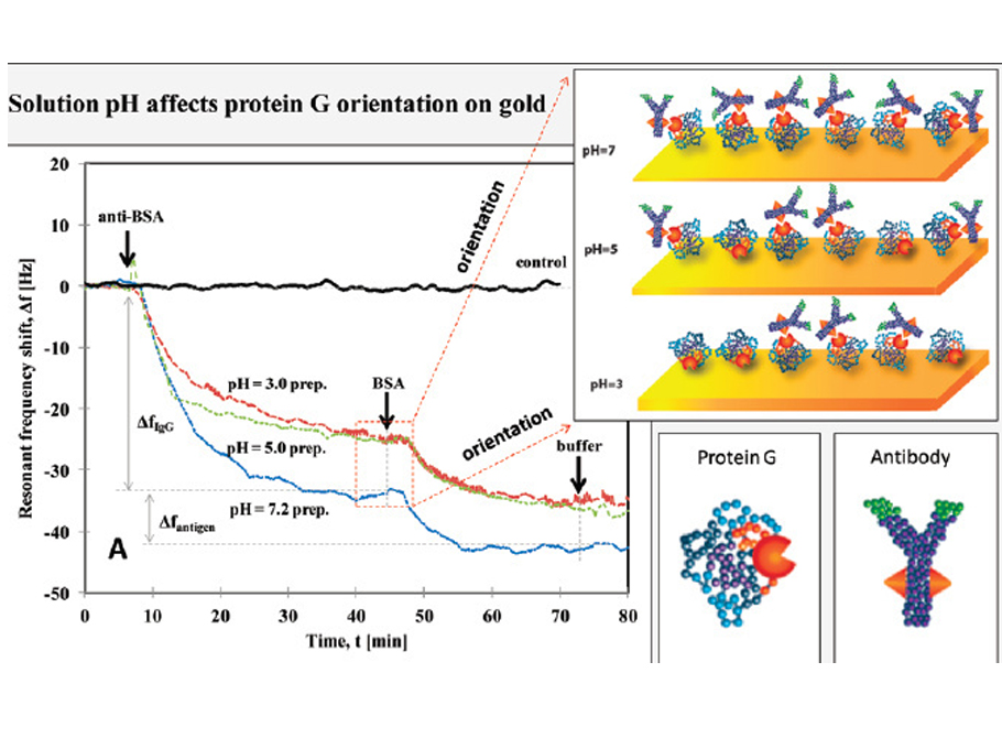 Effect of pH on controlled orientation of protein adsorption to Au surfaces Langmuir 28, 6928-6934 (2012)