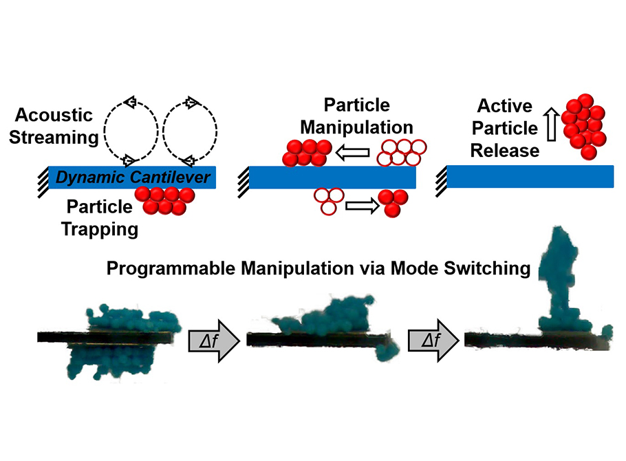 Acoustofluidic particle trapping, manipulation, and release using dynamic-mode cantilever sensors, Analyst 142, 123-131 (2016)