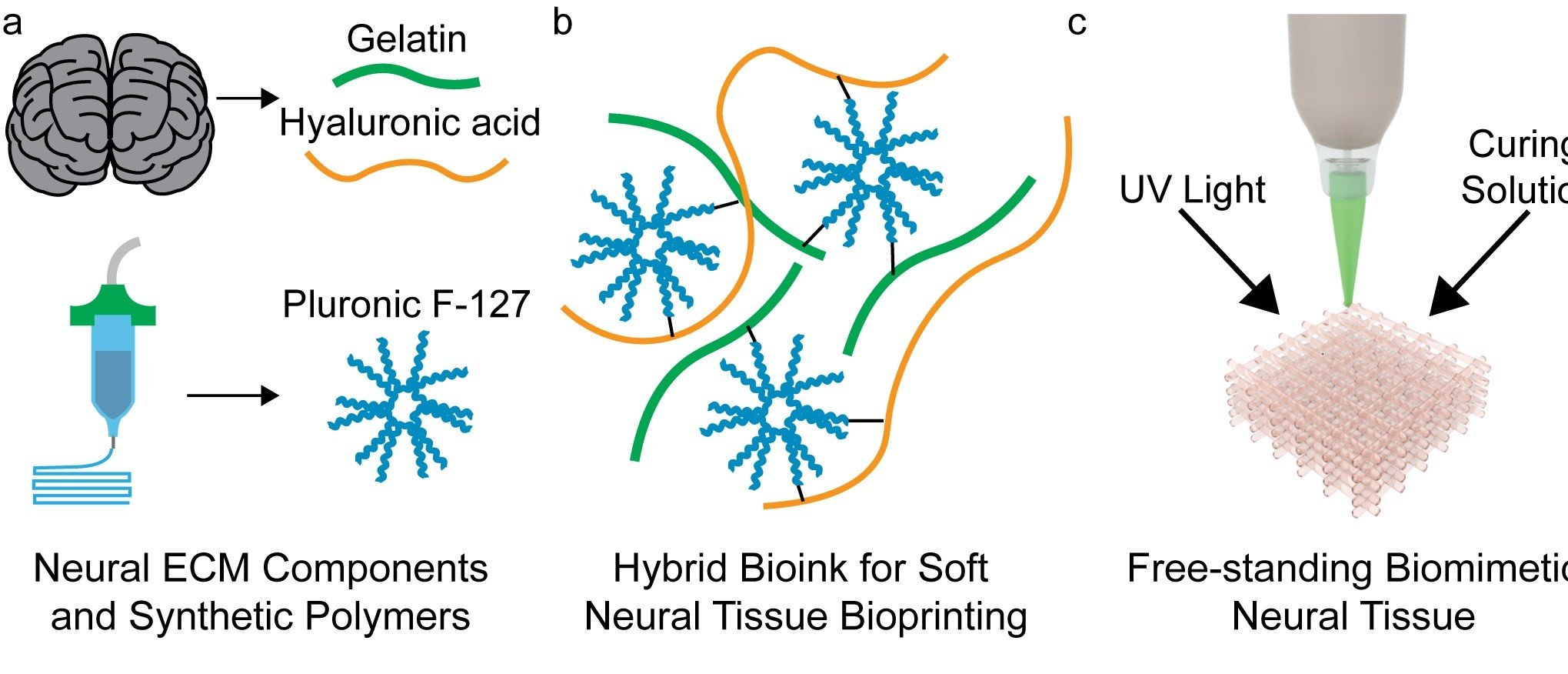 Process- and bio-inspired hydrogels for 3D bioprinting of soft free-standing neural and glial tissues, Biofabrication, 11, 025009, (2019)