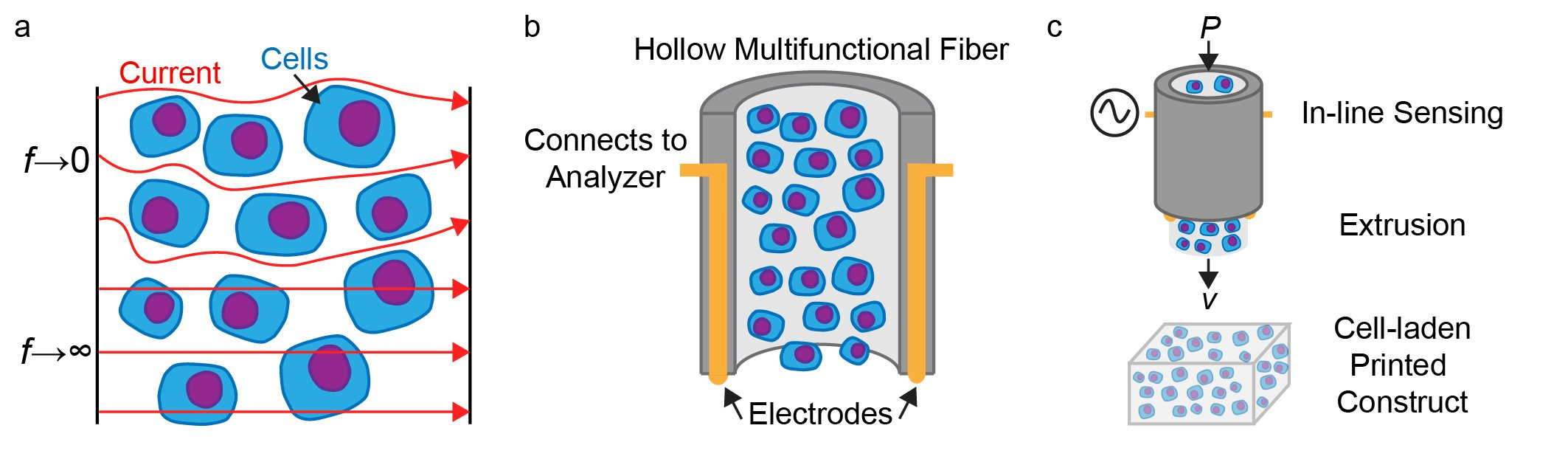 3D bioprinting using hollow multifunctional fiber impedimetric sensors, Biofabrication, 12, 035026 (2020)